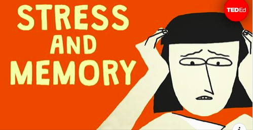Stress and memory